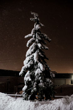 Snow covered - image gratuit #290465