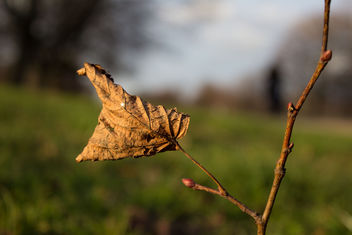 Dry Winter leave - image #290865 gratis