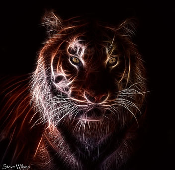 Tiger on Fire - image #290905 gratis