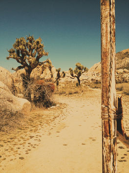 Near Ryan Ranch, Joshua Tree - Free image #291495