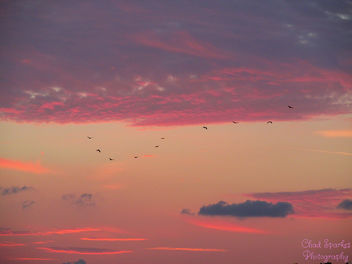 End of the day for the birds - Free image #291885