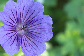 Purple flower - image #292035 gratis
