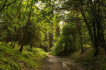 Ufton Fields june 2014024 - image gratuit #292225