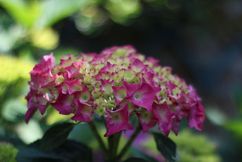 pink and green - image gratuit #292435