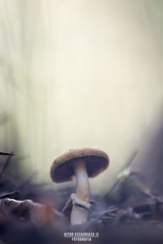 Alone in the forest... - Kostenloses image #294385