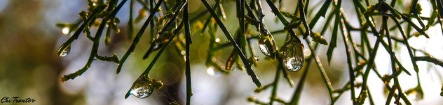 World in water drops - Free image #295015