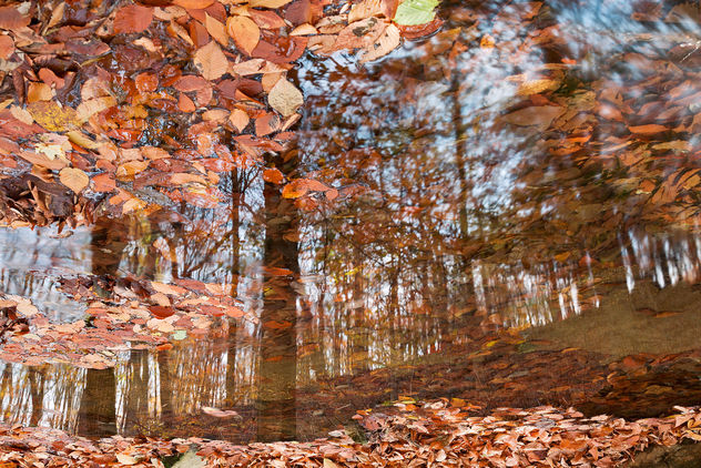 Avalon Fall Reflections - Kostenloses image #295095