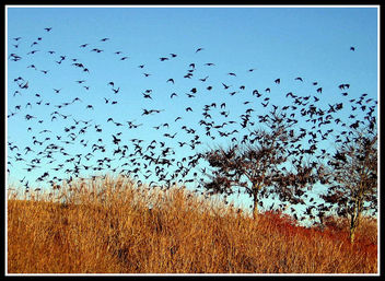 Blackbirds at Dusk, Asheville, North Carolina - image #295175 gratis