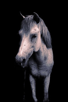 Silver Gray horse on Black background - бесплатный image #295405