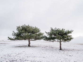 Lovely lonely trees - Free image #295885