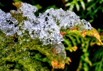 Ice On Leaf _(HDR)_ - Free image #295945