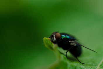 Just a fly - image #295955 gratis