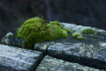 Moss & Wood - Kostenloses image #296125