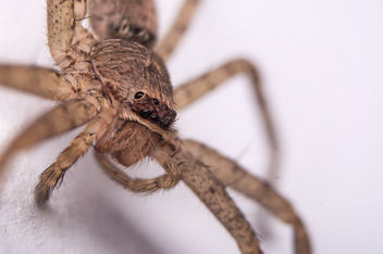 A house Spider - Free image #296765