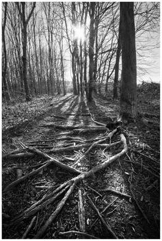 Roots Black and White - Kostenloses image #296855