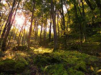Sunlit forest - Kostenloses image #297185