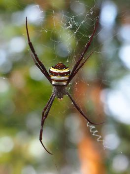Spider on a net - image gratuit #297595