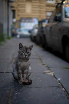 Stray cat - image #298085 gratis