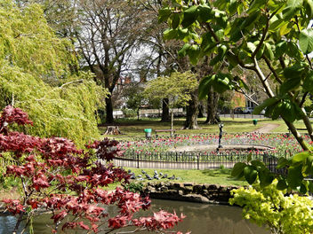 Thompsons Park, Cardiff - image #298395 gratis