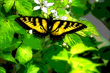 Watercolor Swallowtail - бесплатный image #299455