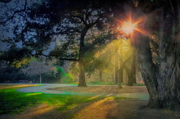 early morning in the park - Free image #299985