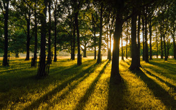 The greatest gold glimmering through the trees - Kostenloses image #300055