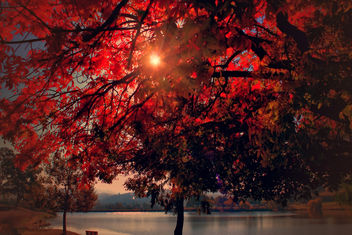 Tree on fire - Kostenloses image #300175