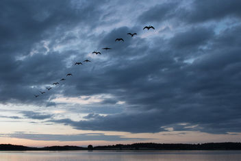 Birds in the sky - Free image #300285
