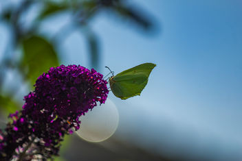 Green butterfly - Kostenloses image #300535