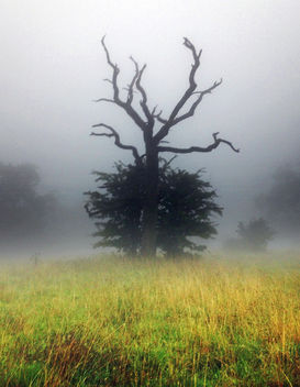 Monsters in the Mist, Cotswolds, Gloucestershire - Free image #300815