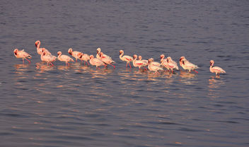 Tanzania (Serengeti National Park) Flamingos - Free image #301035