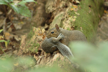 Momma squirrel with her babe in tow - image #301235 gratis