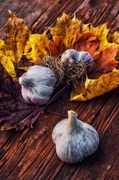 Garlic and yellow leaves - image gratuit #302035