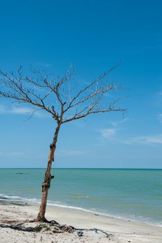 dead tree on the beach - image gratuit #303345