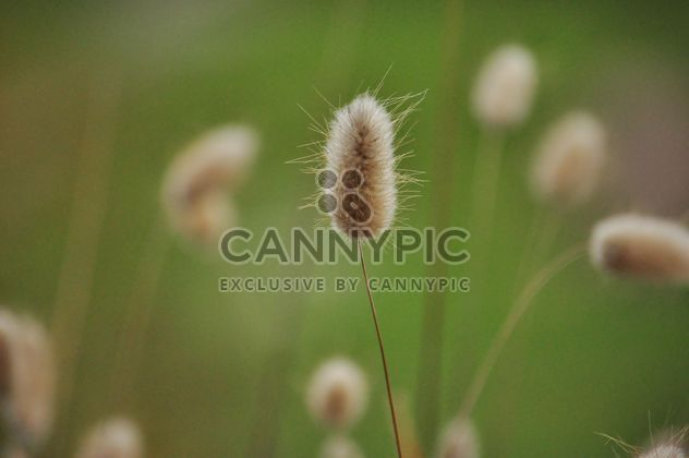 withered grass in focus sunlight - Free image #303995
