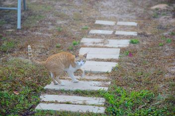 red cat takes a morning walk - бесплатный image #304035