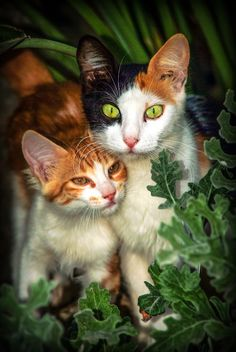 Two kitten portraits - image gratuit #304055