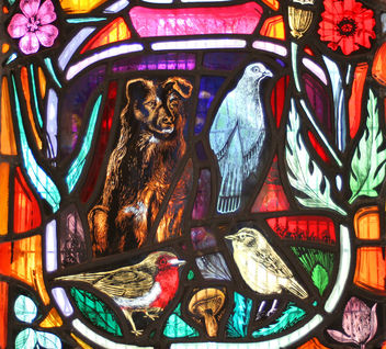 Local Wildlife - stained glass window, Dornoch Cathedral #2 - Free image #306035
