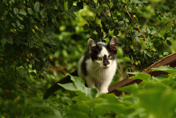 Wild Kitten on the Prowl - бесплатный image #306175