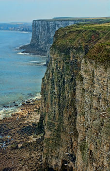 Bempton Cliffs, Bridlington, East Yorkshire - бесплатный image #306255