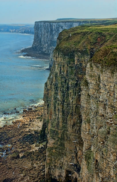 Bempton Cliffs, Bridlington, East Yorkshire - image gratuit #306255