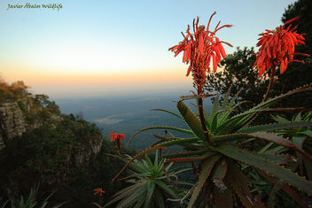 God's Window (Mpumalanga, South Africa) - Free image #306755