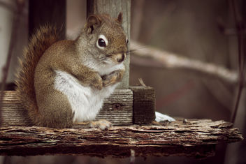 Squirrel on the Feeder, Hartley, Duluth - image gratuit #307045