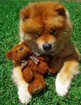 My dog and my teddy =) - image #308155 gratis