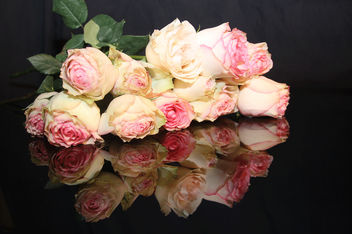 Rose Reflections, A Dozen Pink Cream Yellow Roses Reflected in a Mirror Image Picture, Free Use, Public Domain, Creative Commons - Kostenloses image #308325
