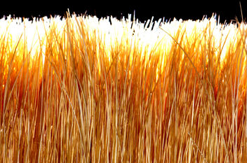 backlit paintbrush bristles - image gratuit #311055