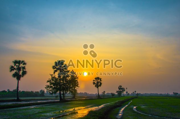 sunset on the cornfield - бесплатный image #317425