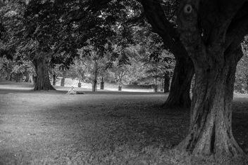 In the park... - Free image #318535