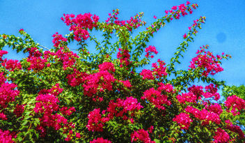 Blooms all year round - image gratuit #318815