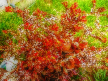 A splash of red - image gratuit #319125